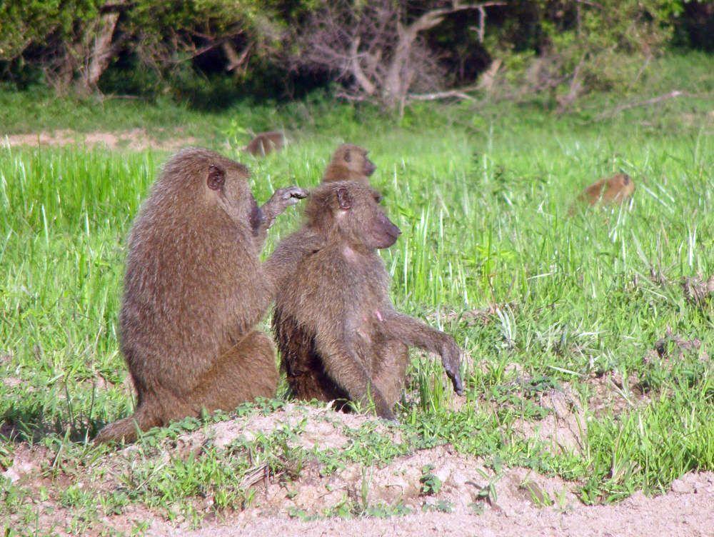 Blog-mole-Ghana-Africa-3000KM-viajes-Aventura-Alternativos-Mochilero-Turismo_Responsable-06