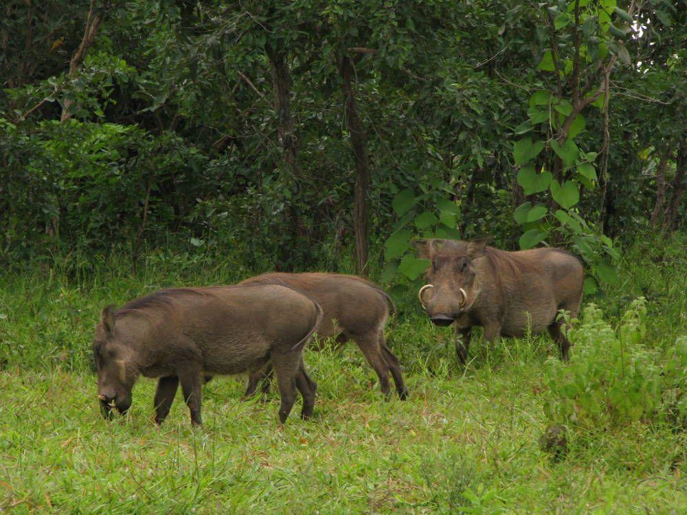 Blog-mole-Ghana-Africa-3000KM-viajes-Aventura-Alternativos-Mochilero-Turismo_Responsable-11