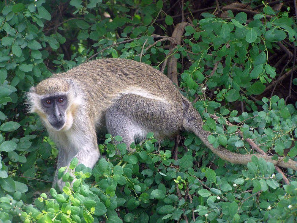 Blog-mole-Ghana-Africa-3000KM-viajes-Aventura-Alternativos-Mochilero-Turismo_Responsable-12