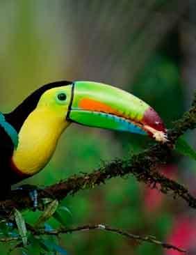 Destino Costa Rica, Centro America: Viajes de Aventura, Viajes Alternativos, Turismo Responsable, Mochilero, Viajar en Grupo, Viajar Sola, 3000KM