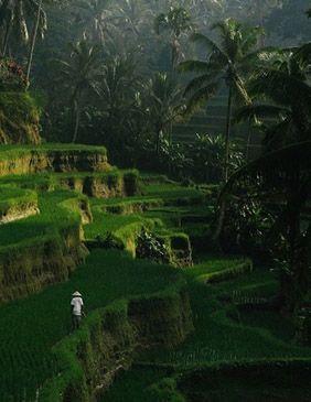 Indonesia Asia h -Viajes-de-Aventura-Viajes-Alternativos-Turismo_Responsable-Mochilero-Viajar_en_Grupo-Viajar_Solo-3000KM 2
