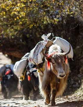 Nepal-Asia-h--Viajes-de-Aventura-Viajes-Alternativos-Turismo_Responsable-Mochilero-Viajar_en_Grupo-Viajar_Solo-3000KM