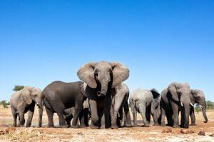 Viaje en grupo a Tanzania