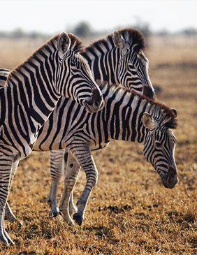 Tanzania, Africa, Viajes de Aventura, Viajes Alternativos, Turismo Responsable, Mochilero, Viajar en Grupo, Viajar Sola,