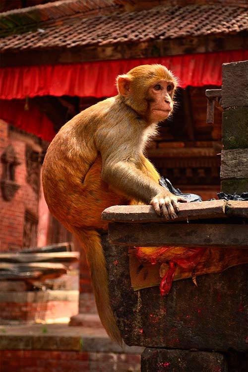 Templo de los monos, Nepal, Asia - Viajes de Aventura y Viajes Alternativos y de Turismo Responsable en Grupo, Solo, Mochilero - 3000KM